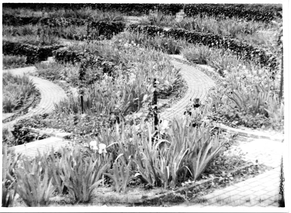 The Sunken Garden planted with irises, ca. 1935
