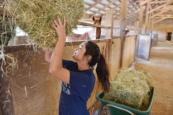 Gunby Student Worker with Hay