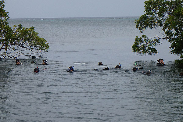 01 - Snorkeling through the mangroves