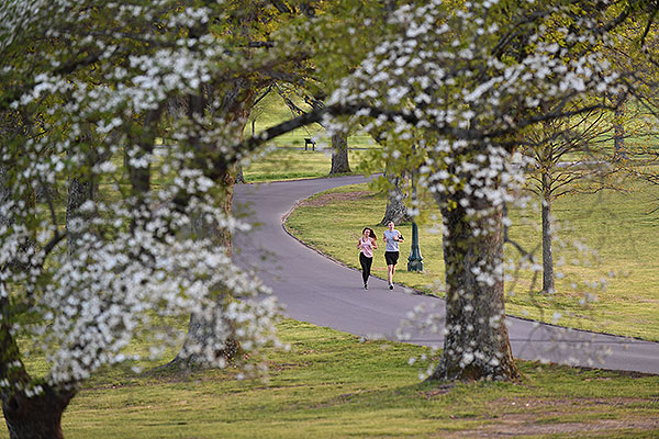 11 - Students running behind blooming trees