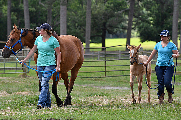 02 - Two students walking a mare and a foal