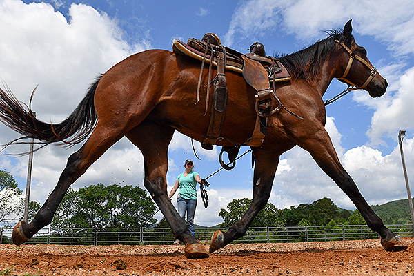 03 - Upward perspective of a horse running