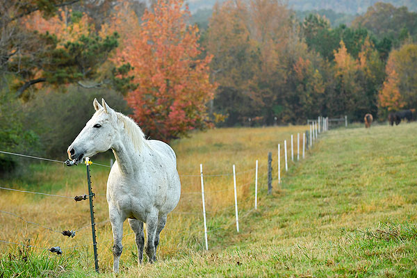 03 - Horse in a pasture surrounded by changing leaves