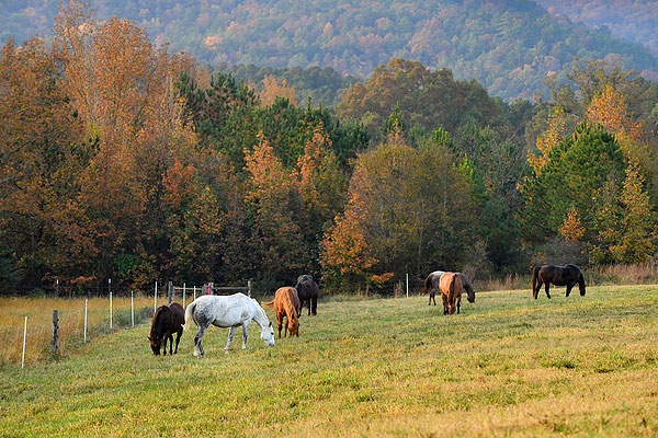 11 - Horses in a pasture