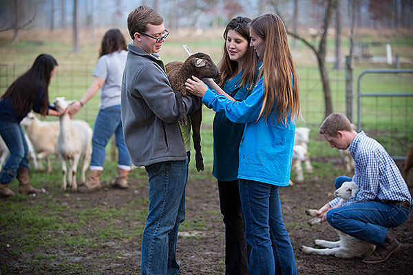 Animal Science Gallery - image 9